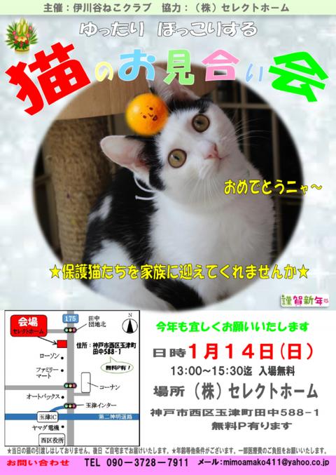 猫のお見合い 1月
