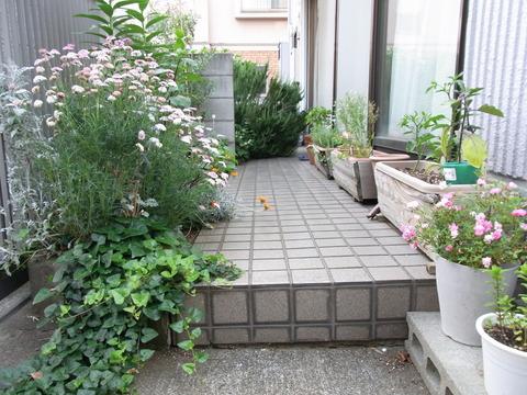 コレクティブ家庭菜園