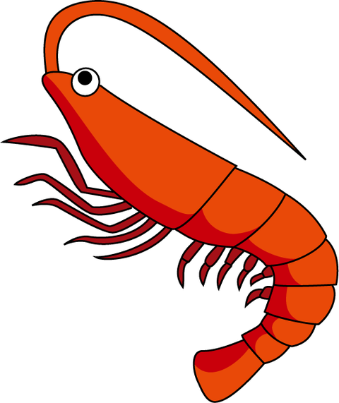 shrimp_a02