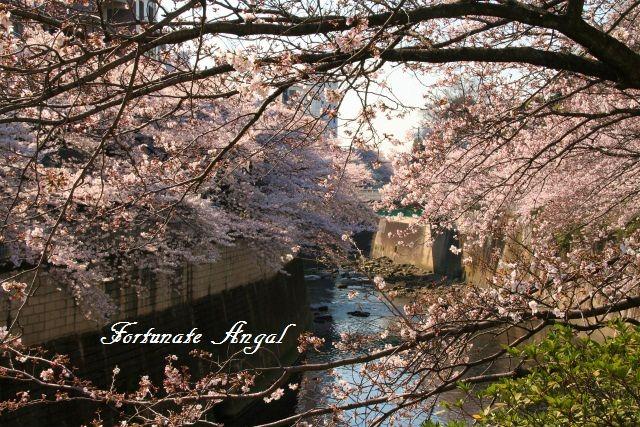 4_6花見blog02