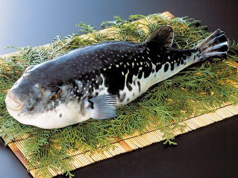 釣ったフグを家族で鍋に 肝臓食べた男性(44)が食中毒