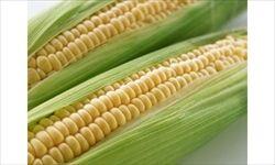 世界三大穀物 米←わかる 麦←わかる