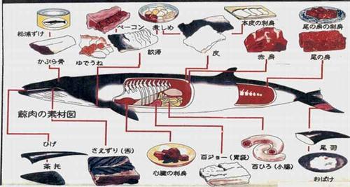 鯨肉食ったことある奴いる?