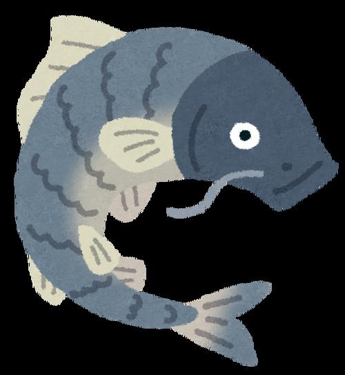 fish_koi