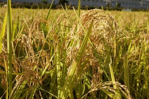 東京を「農協」に変えると田舎っぽくなる現象