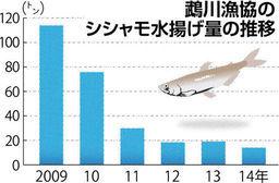 シシャモが謎の不漁 北海道むかわ町が浜値の高騰で苦境