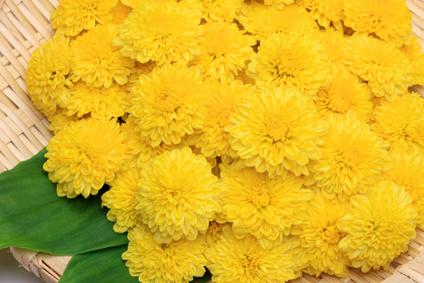 菊の花のお浸しって全国に有るの?子供の時は嫌いだったが大人になって分かった