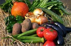 家庭菜園こそ最強のストレス解消法 キウイ トマト ナス じゃがいも ミント この辺りマジお勧め