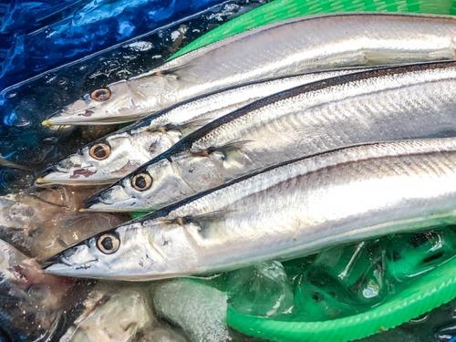 【悲報】サンマが捕れなくなりロシア水域ギリギリまで漁師が遠征し始める