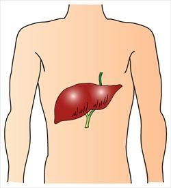 俺、脂肪肝で死亡wwwwww