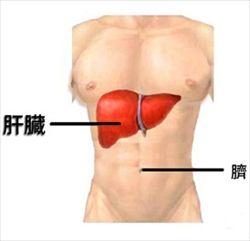肝臓の回復方法教えて下さい