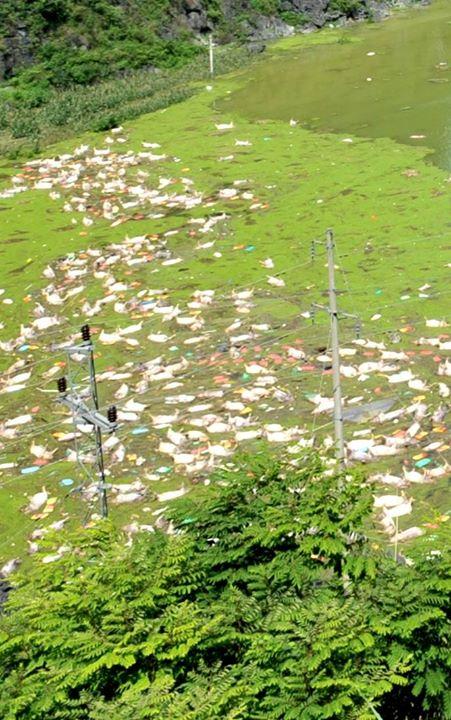 【画像】大洪水で養豚場の豚16,000匹が溺死 中国ネットユーザーが「地元のファーストフード店に食材として卸されるのか」と不安がる