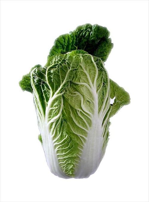 白菜とかいう神が作った野菜wwwwwwwwwwwwwwww