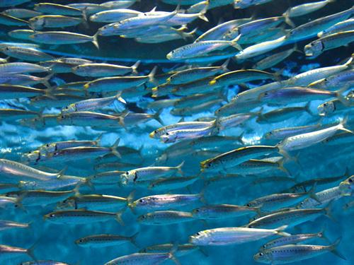 乱獲続けば…海の幸の漁獲が「今世紀半ばにゼロ」 国連が報告書