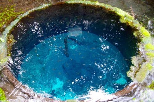 日本の湧水・名水ランキング 1位、池山水源 2位、白川水源 熊本県がワンツーフィニッシュ