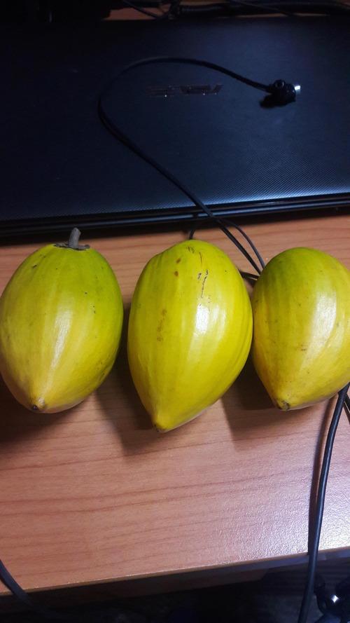 台湾に留学してる大学生だけど仙桃を買ってきたよ