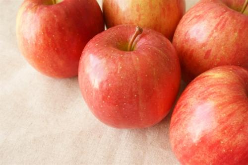 収穫目前のりんご1200個盗難  3年連続被害に遭う