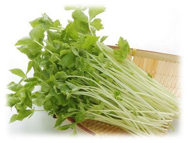 三つ葉は根っこだけ土に戻すとうまくいけば根付いて新芽が出てくる。小松菜、水菜、春菊なんかも上手くすれば再生する。