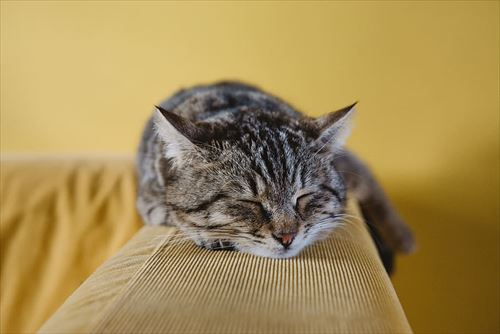 cat-cute-animal-couch_R