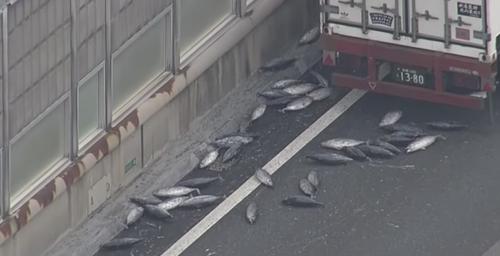阪和道で300mにわたりカツオが散乱、保冷車から落下