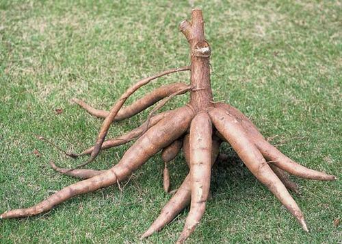 cassava-ethanol