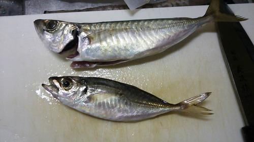 釣ってきた魚を調理してやったぜwwwwwwwwwwwwwwwww