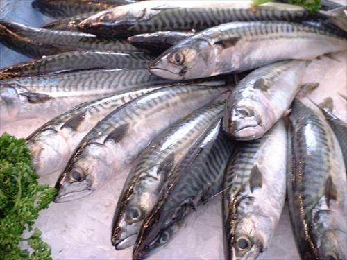 サバっていう魚って過小評価されてるよな、攻守共に最強やんけ!