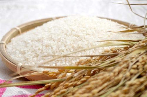 30分吸水させた米といきなり炊いた米の違いがわからない