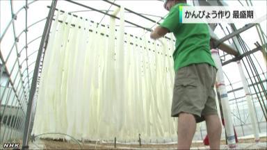 かんぴょう生産 全国一の栃木で最盛期  壬生町