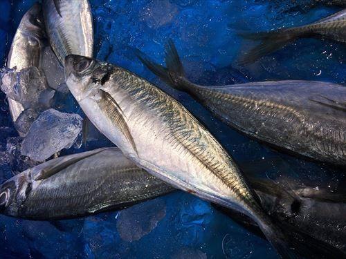 もしかしてアジが1番美味い魚なんじゃね…?