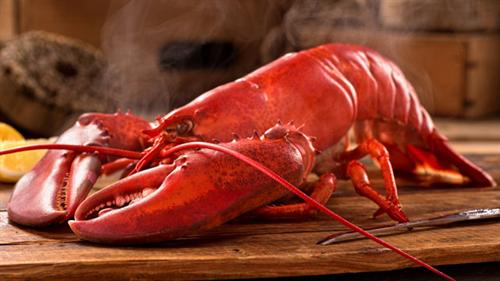 暴れるロブスターを熱湯に放り込む調理法が禁止に 「脳の破壊」による気絶が義務づけ