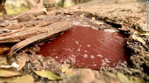 【カリフォルニア火災】沸騰するワイン流れる、火災被害の醸造所 赤ワインが地面下の熱で煮えたぎりながら丘陵部を流れる異様な光景