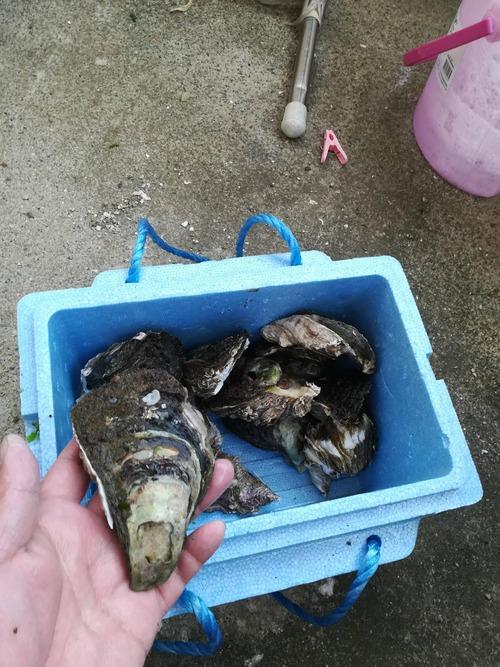 岩牡蠣取って来たからベランダで焼いて食う
