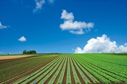 田舎でのんびり農業でもやって暮したい←農業舐め過ぎだろ