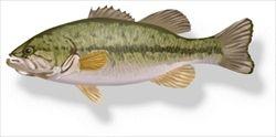 「外来魚を食べて琵琶湖の魚を守ろう」 給食にブラックバス登場