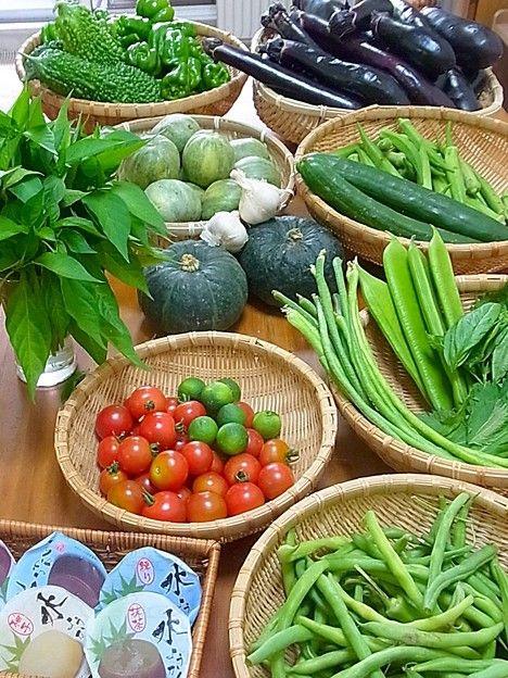 野菜の神様「野菜を何か1つだけ一生無料にしてやるよ」←なに選ぶ?