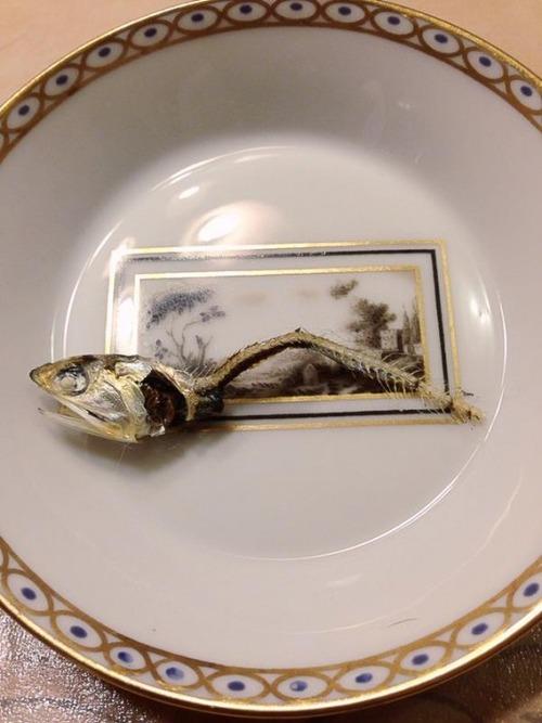 【にゃんこ】「どうやって食べてるの?」煮干しの頭と骨を上品に残して食べる猫が賢いと話題(画像あり)