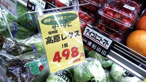 レタス1玉498円+消費税