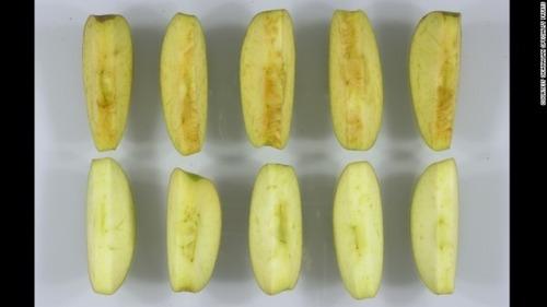 アメリカ「新しい遺伝子組み換えリンゴを承認した!切っても茶色にならない!」 塩水にでも漬けとけよ