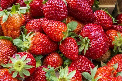 イチゴ農家「TOKIOがイチゴの品種改良やっとる…ワイもやってみるか」