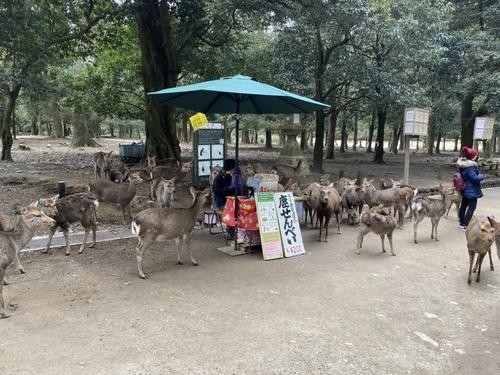 【悲報】鹿さん、鹿せんべいくれる観光客が少なすぎて売り場を包囲してしまう
