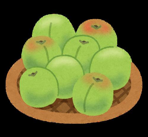 庭に梅の木があってタワワに実ってるんだけどどうやって食べたらいいのかわからない