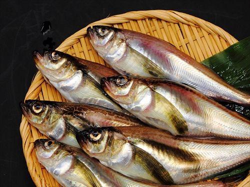 ハタハタとか言う食われるためだけに生まれてきた魚