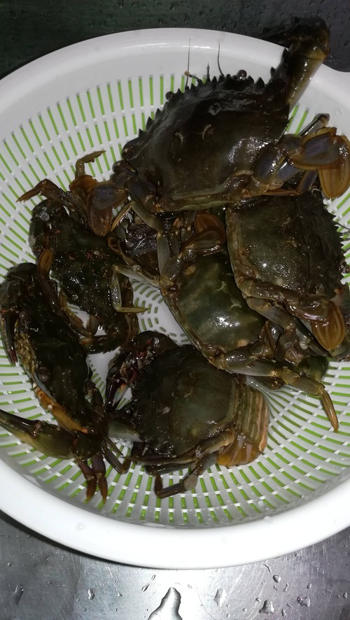 ワイ堤防釣りで蟹をお持ち帰り、無事味噌汁へ