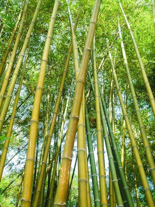 """""""竹""""とかいう謎の木wwwwwwwwwwwwwwwwwwww"""