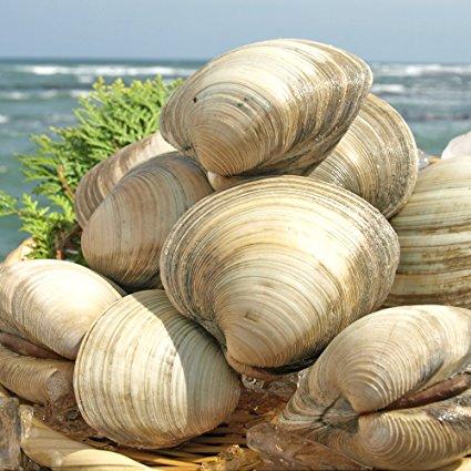 千葉県のブランド水産物に選ばれた外来種のホンビノス貝 青潮に強く爆発的に繁殖 年中取れ値段も手頃