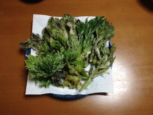山菜の天ぷら実況 他の料理もありまする