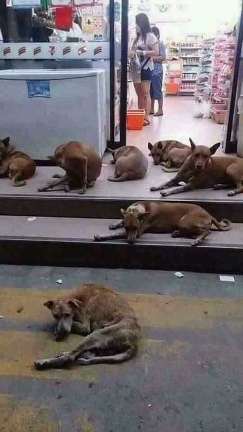 タイのセブンイレブンがやばい