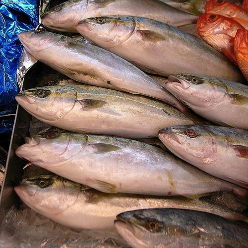 最高に美味しい魚を教えろ