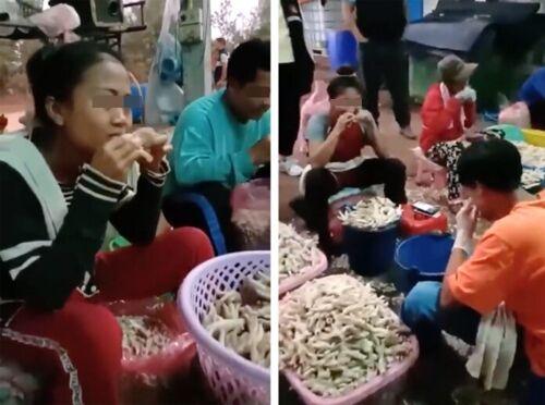 タイの鶏肉工場で骨を取り除く工程がヤバイと話題に 新型コロナウィルス対策で政府が辞めるように勧告
